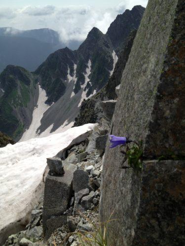 岩からお花