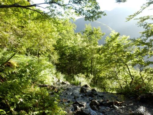 登りの沢の景色