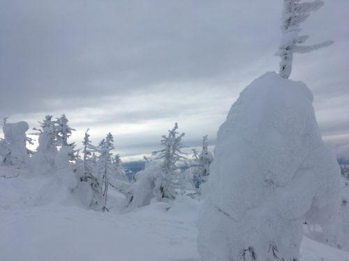 蔵王温泉スキー場樹氷