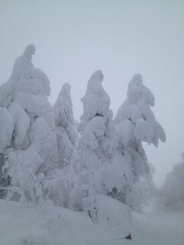 蔵王温泉スキー場樹氷数年前
