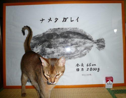 女川釣果・ナメタガレイ魚拓
