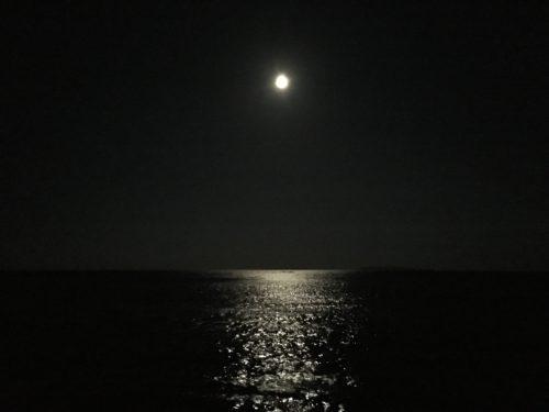 アオリイカ夜釣り