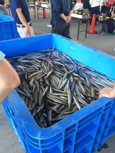 女川秋刀魚収穫祭・サンマ