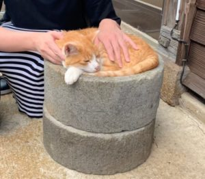 ぬる湯温泉のネコ