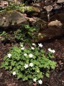 泉ヶ岳お花