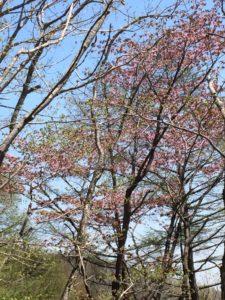 泉ヶ岳お花6