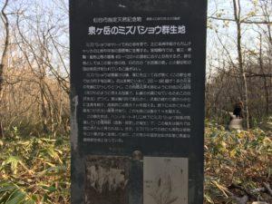 泉ヶ岳水芭蕉群生地