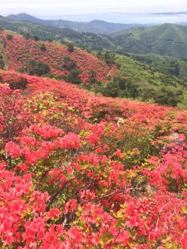 徳仙丈山(気仙沼)のツツジ観光