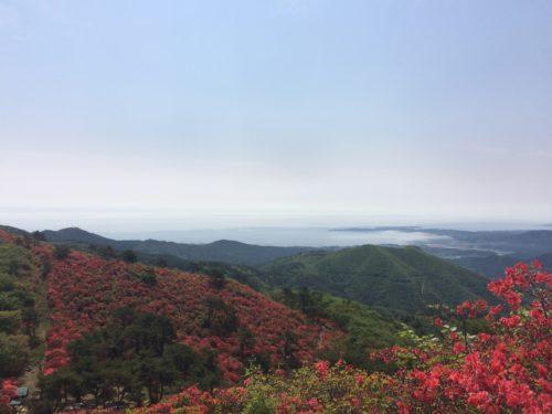 徳仙丈山(気仙沼)のツツジ