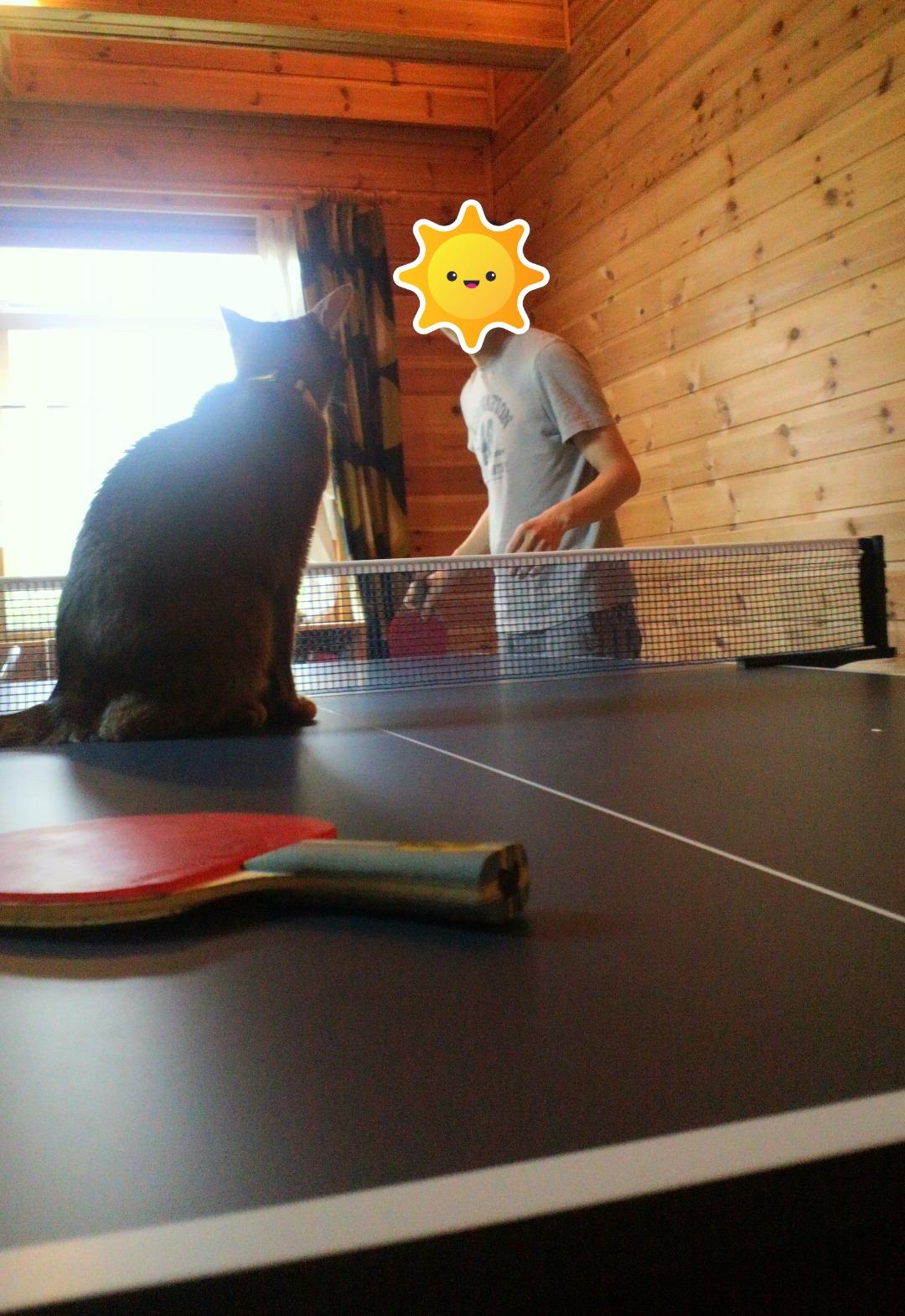 卓球練習ネコ