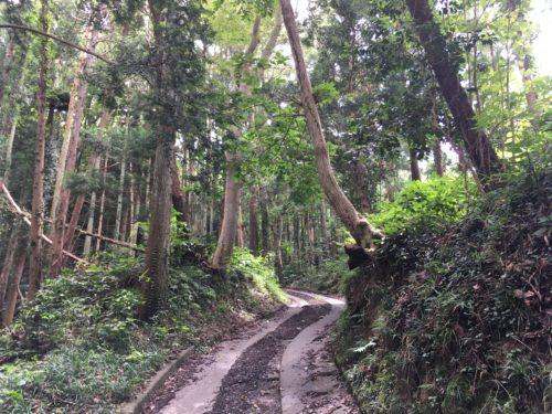 嵯峨渓遊歩道登り