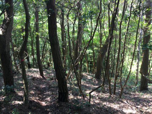 萱野崎への森