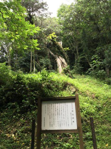 嵯峨渓むろの木