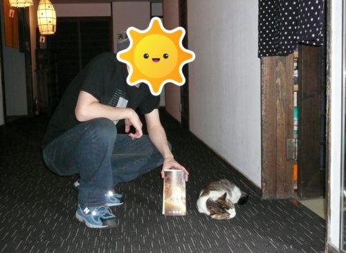 弓ヶ浜温泉湯楽亭のネコ