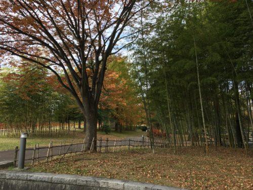 七北田公園竹林