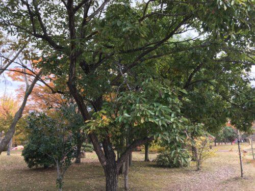 七北田公園どんぐり