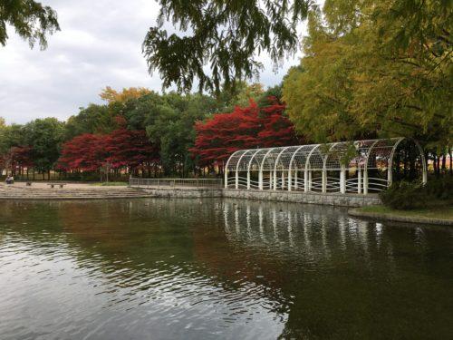 七北田公園池のカモ