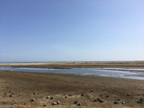 蒲生干潟遠景